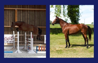 FURIA Z M ET M Z (FLEXIBLE x GRACE B)