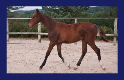 KAP BLUE DES BLES (PLOT BLUE x QUICK STAR)